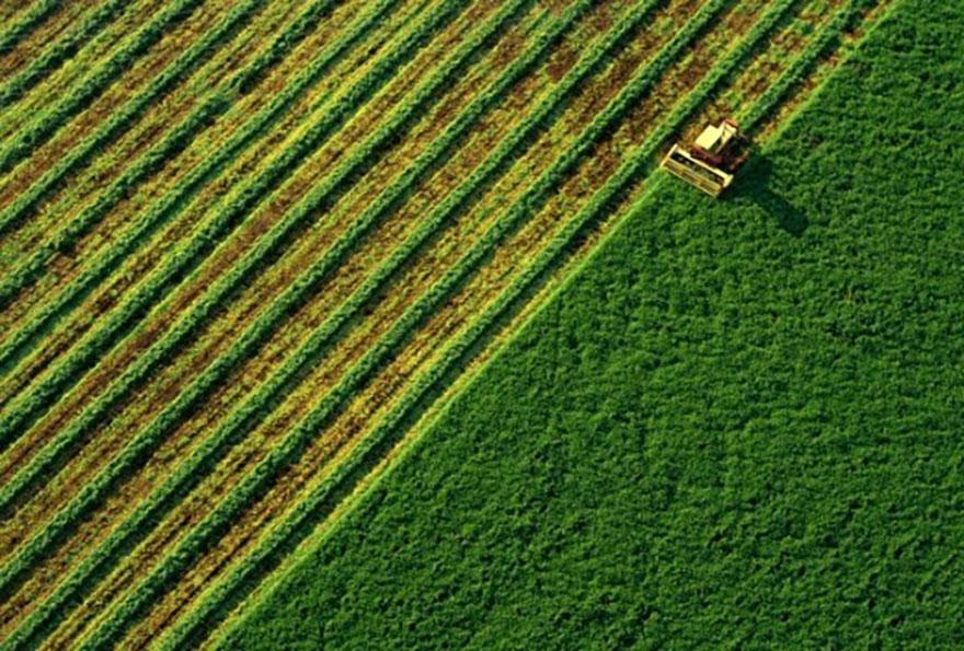 У «ТАС Агро» завершили жнива пізніх зернових культур